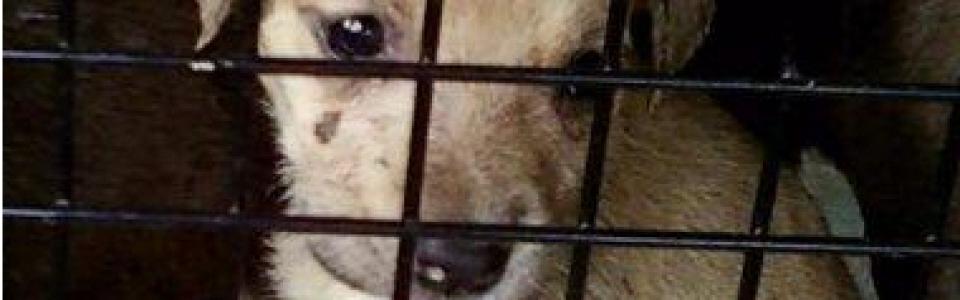 Abandoned PuppiesB